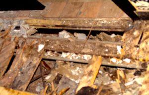 MIAMI HERALD MAYOR MATTIE BOWER IGNORE SOUTH BEACH NIGHTCLUB CLEAR AND PRESENT DANGERS